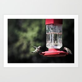 Flutter Art Print