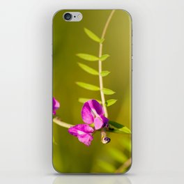 green branched tendrils of Vicia iPhone Skin