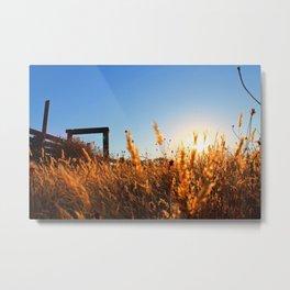 Autumn Wheat Grass Metal Print