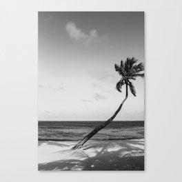 San Pedro Palm B&W Canvas Print