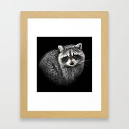 A Gentle Raccoon Framed Art Print