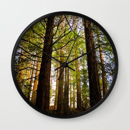 Within The Redwoods Wall Clock