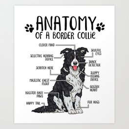 Funny Anatomy Border Collie Dog Lover Gift Art Print