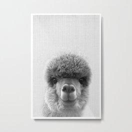 Alpaca Smile Metal Print