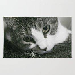 Contemplating Cat Rug