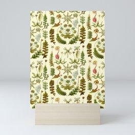 Ernst Haeckel - Hepaticae Mini Art Print