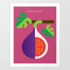 Fruit: Fig Art Print