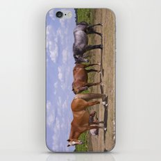 New Forest Ponies iPhone & iPod Skin