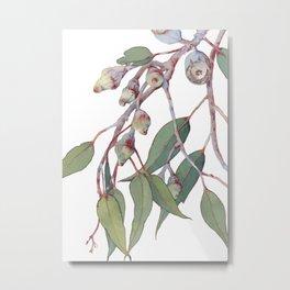 Australian eucalyptus tree branch Metal Print