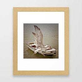 Goéland Framed Art Print