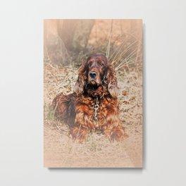 Red setter Metal Print
