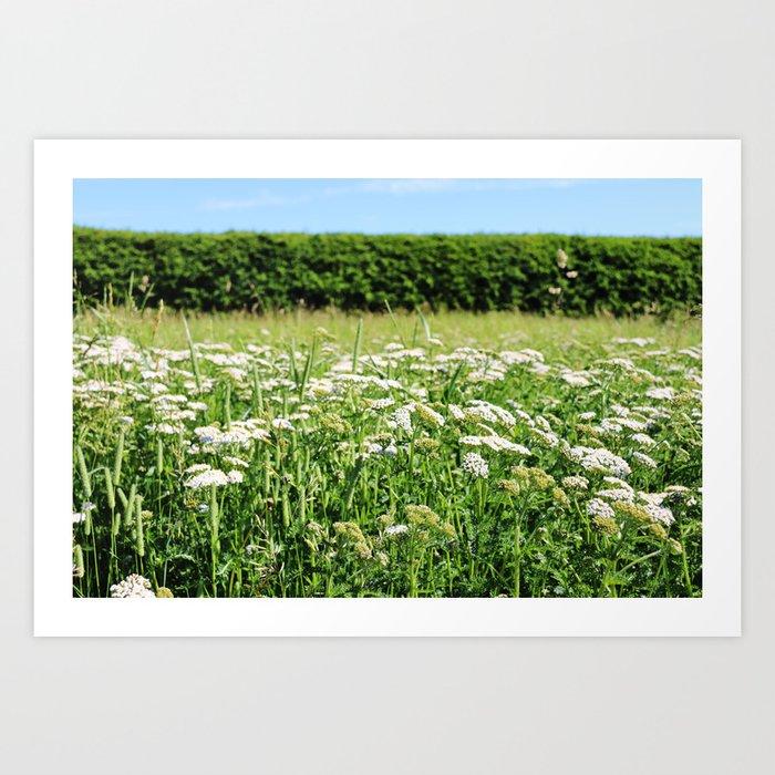 Yarrow meadow and hedge Art Print