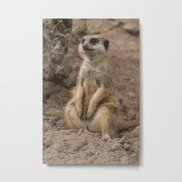 Adorable African Meerkat wildlife animals Metal Print