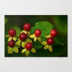 Berry Good! Canvas Print