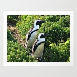 Two African Penguins Strolling Boulders Beach Art Print