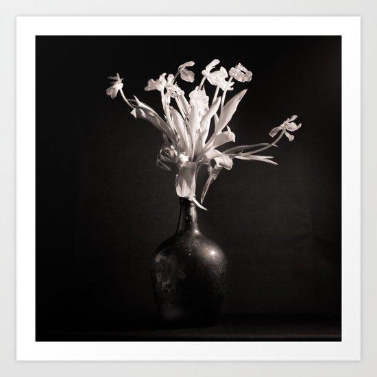 Old White Tulips Art Print