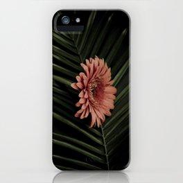 Tropical gerbera iPhone Case
