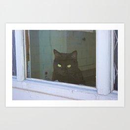 Window to the Wild Art Print