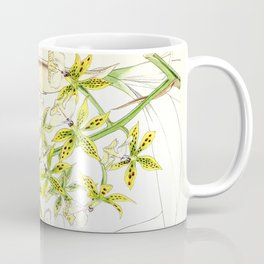 A orchid plant - Vintage illustration Coffee Mug