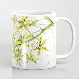 A orchid plant - Vintage illustration Coffee Mug