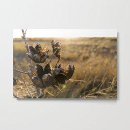 Yucca Seeds Metal Print