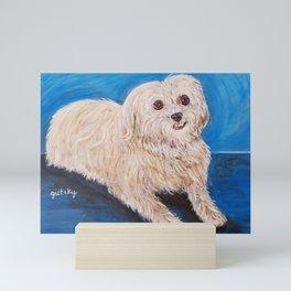 Shih Tzu Maltese Mix Dog Portrait Mini Art Print