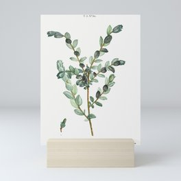 Creeping willow (Salix arenaria) from Traité des Arbres et Arbustes que l'on cultive en France en pl Mini Art Print