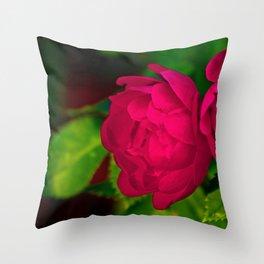 Shrub Roses Throw Pillow