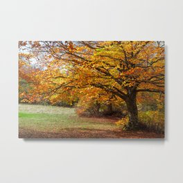 Colorful autumn in the forest of Canfaito park, Italy Metal Print