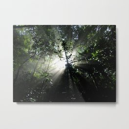 Tropical Forest - Brazil Metal Print