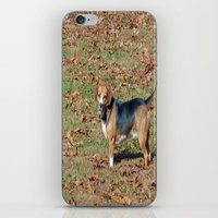 beagle iPhone & iPod Skins featuring Beagle by Frankie Cat