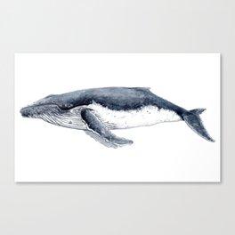 Humpback whale (Megaptera novaeangliae) Canvas Print