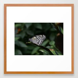 Butterfly House 1 Framed Art Print