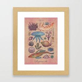 Aequoreus vita II / Marine life II Framed Art Print