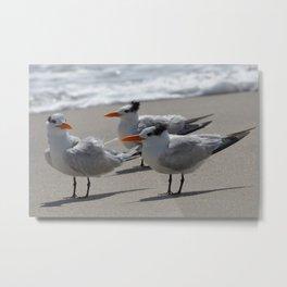 tern, tern, tern Metal Print