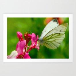 Butterfly's inn ... Art Print
