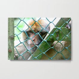 Monkey Cage Metal Print