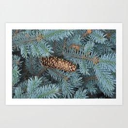 Fallen Pinecone Art Print