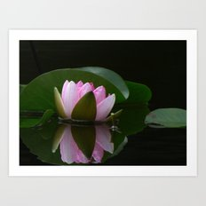 Reflecting Water Lily Art Print