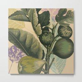 Vintage Fig Metal Print
