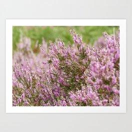 Summer Pink Purple Heather Art Print