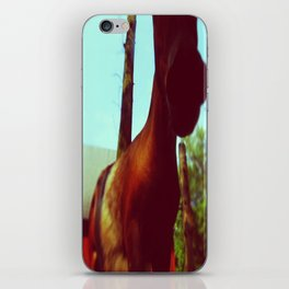 Horse at a Zoo iPhone Skin
