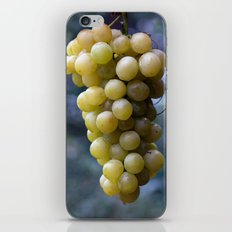 Harvest time ... 8508 iPhone & iPod Skin