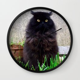 King cat owl Pomponio Mela Wall Clock
