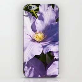 Clematis Bloom iPhone Skin