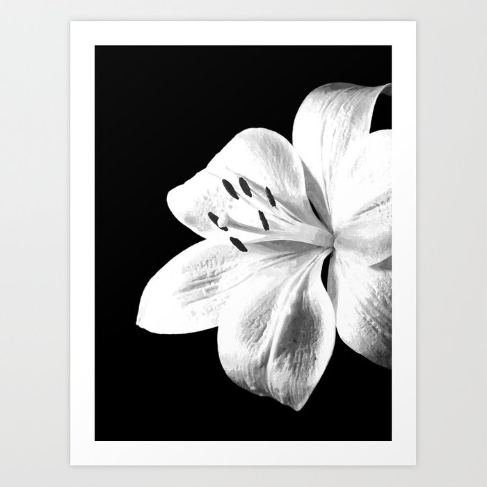 White Lily Black Background Kunstdrucke