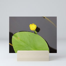 Yellow waterlily with lily pad Mini Art Print