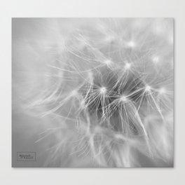 Softness 2018 Canvas Print