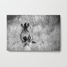 Baby Zebra Portrait; Black and White Nature Photography from Africa Metal Print