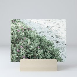 Calm beach - close up of sand and pink flowers / plant (pig face) Mini Art Print
